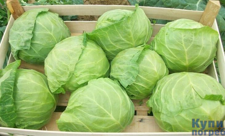 Варианты хранения капусты