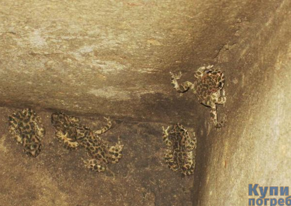 Причины появления лягушек