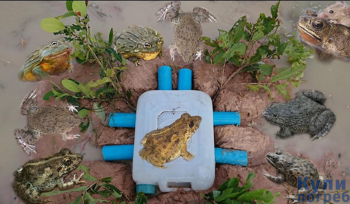 Способы избавления от лягушек